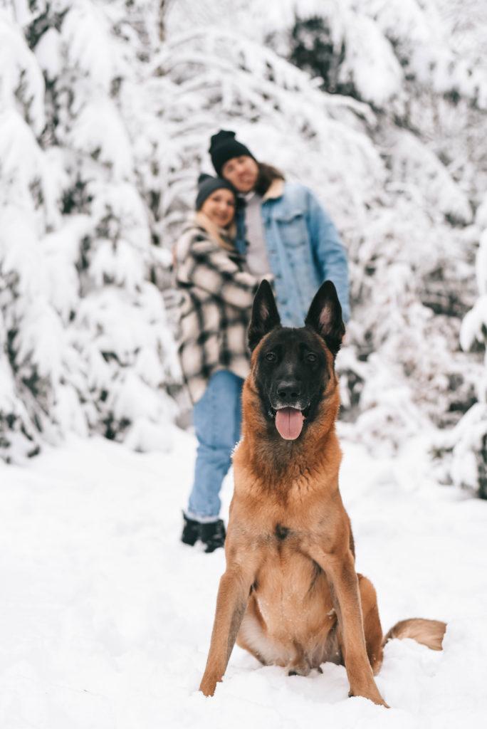 séance-couple-neige-chien-saint-hubert